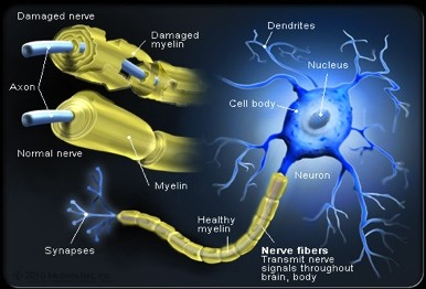 MYELIN SHEATH DISORDERS