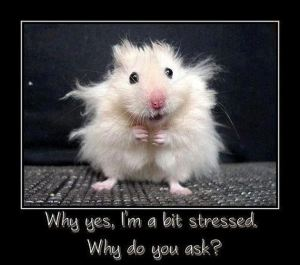 mouse-frazzled-bit-stressed
