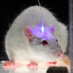 mice light brain